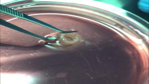 بیو پرینت آنتی بیوتیک ها: HP Partner با CDC